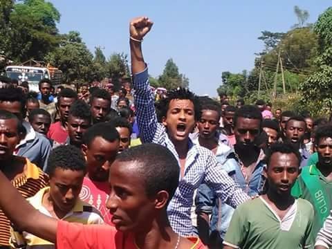 Diddaa Barattoota Oromoo Wallaggaa